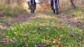 krachtig : Two motorcyclists riding on trail in autumn forest. Motorcycles driving on wood path over autumnal colorful fallen leaves. Bikers train in nature. Active rest outdoor. Blurred background. Slow motion