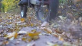 krachtig : Motorcyclist rides on trail in autumnal forest. Motorcycle drives along wood path kicking up dry fallen leaves. Biker trains in nature. Extreme sport. Back view Slow motion Stockvideo
