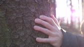 borovice : Young male hand stroking a bark of pine with sun light at background. Unrecognizable man touching a trunk of tree in the forest on sunny day. Concept of environmental protection. Close up Slow motion Dostupné videozáznamy