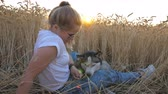 ハスキー : Profile of young girl in sunglasses sitting among golden ripe spikelets at meadow and stroking her husky dog at sunset. Happy woman with blonde hair resting with her pet in wheat field. Side view 動画素材