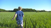 gras : Follow to happy boy is running through the field with green wheat at a sunny hot day. Carefree child in hat jogging at the meadow in summer and having fun. Concept of childhood and rest. Slow motion