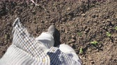 scène rurale : Point of view of male feet in boots stepping through the small green sprouts of sunflower on the field at sunny day. Young farmer walking on the meadow during drought at summer. Close up POV Vidéos Libres De Droits