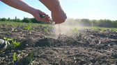 scène rurale : Male hands of farmer holding pile of dry soil and pouring it back through his fingers on the field at sunny day. Concept of agricultural business. Low angle view Slow motion Close up