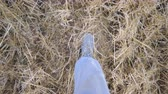 stiefel : Point of view to legs of man going and stepping on dry straw. Unrecognizable guy in sneakers walking at wheat field. Steps of male feet. POV Slow motion Close up