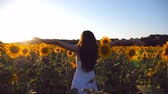 scène rurale : Young girl standing at the field of sunflowers and raising her hands up. Woman enjoy by landscape and freedom at the meadow. Rear back view Slow motion Close up