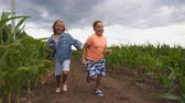 Little girl and boy having fun while running to the camera through maize plantation. Small kids playing among corn field. Cute smiling children jogging in the meadow. Concept of happy childhood Stock Footage