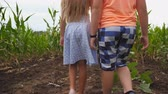 неузнаваемый : Rear view of small girl and boy walking through corn field and taking each other hands. Couple of little kids going among maize meadow holding arms. Concept of first child love. Low view Slow motion