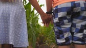 handen ineen : Low view of small girl and boy standing at corn field and taking each other hands. Couple of little kids holding arms at maize plantation. Concept of first child love. Rear view Slow motion