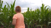 olhares : Happy small red-haired boy running through corn field, turning to camera and smiling. Cute little kid having fun while jogging over the maize plantation at overcast day. Rear view Slow motion Stock Footage