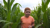 milharal : Close up of cute little red-haired boy running through corn field and trying to reach camera with hand. Happy small ginger kid jogging over the maize plantation at overcast day. Slow motion