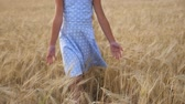 spikelet : Small girl in walking through wheat field and stroking ripe spikelets. Cute child spending time at plantation and touching golden ears of crop. Little kid in dress going over the meadow of barley