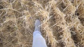 scène rurale : Point of view to legs of man going and stepping on dry straw. Unrecognizable guy in sneakers walking at wheat field. Steps of male feet. POV Slow motion Close up