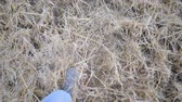 неузнаваемый : Point of view to male legs running and kicking up dry straw. Unrecognizable guy in sneakers jogging through wheat field. Athlete training outdoor. POV Top view Slow motion Close up