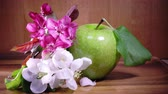 urlop : Apple tree flowers white and crimson with leaves and green ripe apple