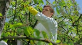 pesticide : Agricultural worker spraying trees with pesticide