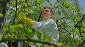 pesticide : Farmer spraying trees with chemicals in orchard
