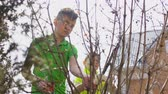 broken tree : Two boys cut the bush with a pruner and gardening scissors Stock Footage