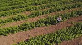agribusiness : Young girl walking among the rows with strawberry bushes at the field