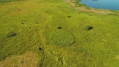 vacas : Beautiful top view at green summer meadow with a cow and blue lake