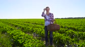 vime : Young happy girl hold basket full of strawberries at green plantation background