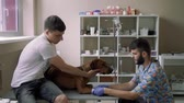 tourniquet : Vet puts the catheter to the dog, which lies on the table