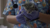 diagnóstico : Veterinarian hold a small kitten in his arms Stock Footage