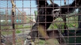 urvat : Monkey eats at the zoo