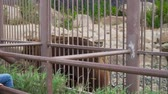 conservar : Big brown bear in the zoo