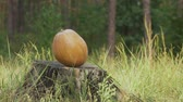 дартс : Arrow hits the pumpkin on a stump