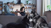 fiel : Two siberian huskies are sitting on the couch. Woman and man talking in the kitchen on the background of huskies. Huskies and their owners rest in the house