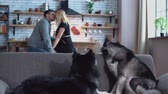 sibiř : Two siberian huskies are sitting on the couch. Woman and man talking in the kitchen on the background of huskies. Huskies and their kissing owners have a rest in the house