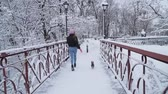 jorkšírský : Funny yorkie walk on leash with owner on the bridge. Small yorkshire terrier running with girl in a winter snow-covered park. Slow motion.