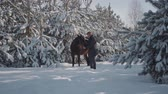 leading : A young man walks with a horse outdoors on the background of snow-covered Christmas trees and pines. The guy drives a horse on a country ranch in winter weather.