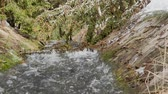 riverbank : Fast moving waterfall creating huge foam on river. Panoramic shooting and ambient sound. Original ambient sound.