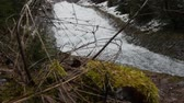 opuštěný : Snowy branch of young Christmas tree sway from the wind on the background of fast moving waterfall creating huge foam on river. Panoramic shooting and ambient sound. Original ambient sound.