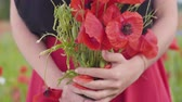 girlish : Close-up view of female hands in a poppy field holding bouquet of flowers. Connection with nature. Green and red harmony. Camera moving down. Leisure in nature. Blossoming poppies. Stock Footage