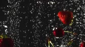 čerstvě : Falling fresh strawberries and cherries splashing into sparkling water on black background. Close up Dostupné videozáznamy