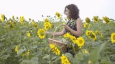 çekmek : Adorable slim girl walking and picking flowers in the big wicker basket in the sunflower field. Connection with nature. Bright yellow color. Happy woman outdoors. Rural life