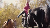 postroj : Young Caucasian woman saddling black graceful horse, turning to the camera and smiling. Professional female equestrian training in the autumn forest.