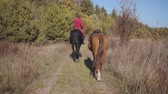 postroj : Camera following young Caucasian female equestrian riding the black graceful horse on the dirt road and holding halter of the brown stallion. Professional jockey spending autumn day with pets outdoor