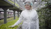 vegetarianismo : Front view of senior Caucasian woman in protective workwear walking along rows of plants in glasshouse. Professional agronomist touching green leaves of seedlings. Job, agriculture, cultivation.