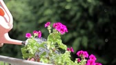 flower bed : Water The Flower With A Watering Can. Pov Top View Video Stock Footage