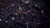segít : Extreme Close Up Shot Of earthworms Gripping Into The Soil.