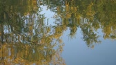riflessi : Reflection Of Trees On The Water Surface.
