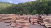 salvado : Panning Shot Of Pile Of Wood Logs Storage. Archivo de Video