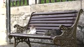 домашнее животное : Two Beautiful Cats Relaxing On A Bench In The City Стоковые видеозаписи