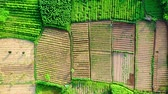 vadi : drone footage of an agricultural land west java. Indonesia Stok Video
