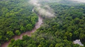 vadi : Aerial Forwardpan Right Of Thick Forest With Thin Fog. MN. United States Stok Video