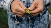 Man Hand Hold Cracked Pea Pod Stock Footage