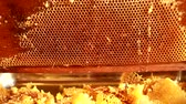 méhkas : Close up of human hand extracting honey from yellow honeycomb. Beekeeper cuts wax off honeycomb frame with special knife.
